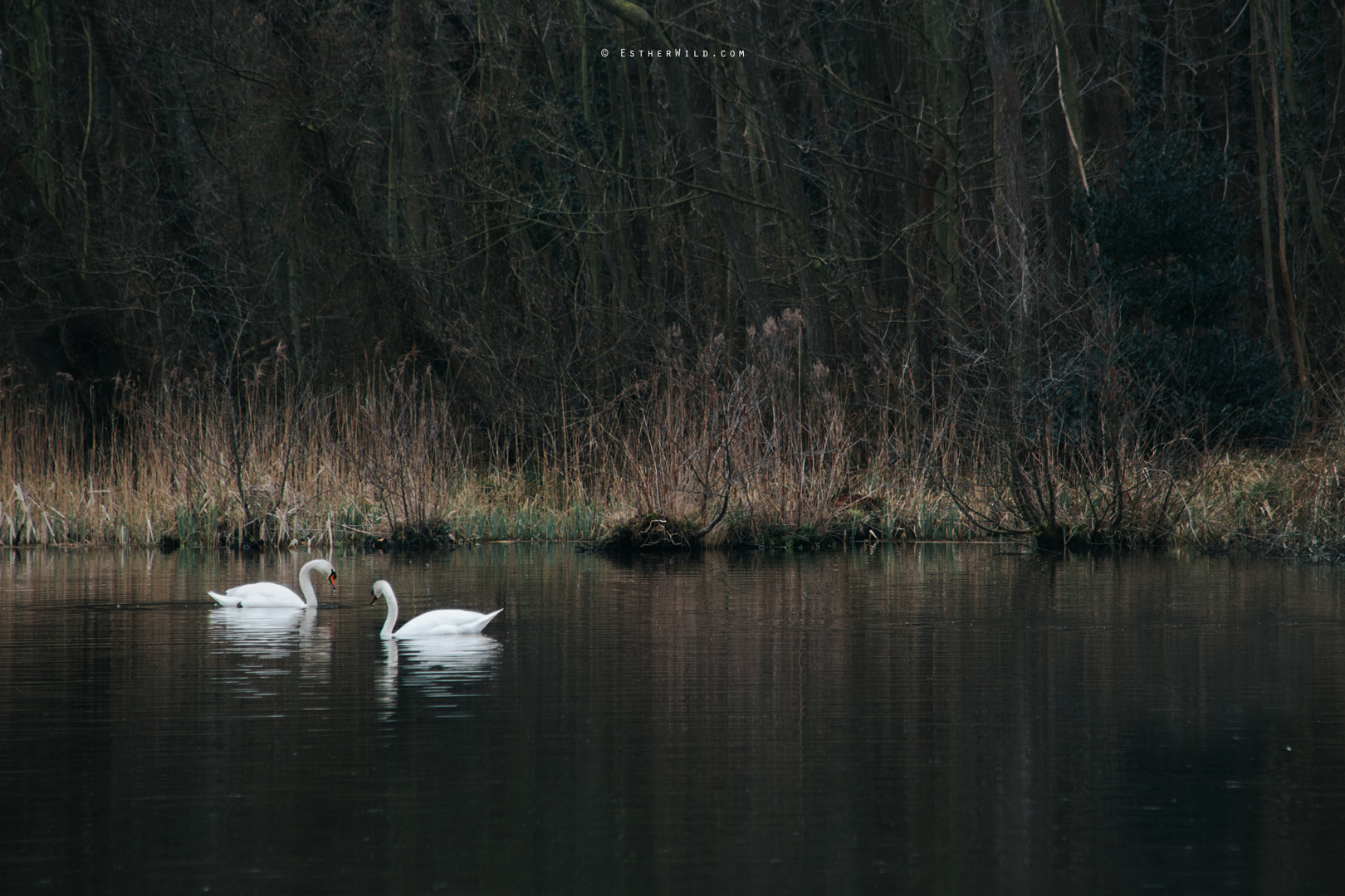 The_BoatHouse_Wedding_Venue_Ormesby_Norfolk_Broads_Boat_Wedding_Photography_Esther_Wild_Photographer_IMG_0184.jpg