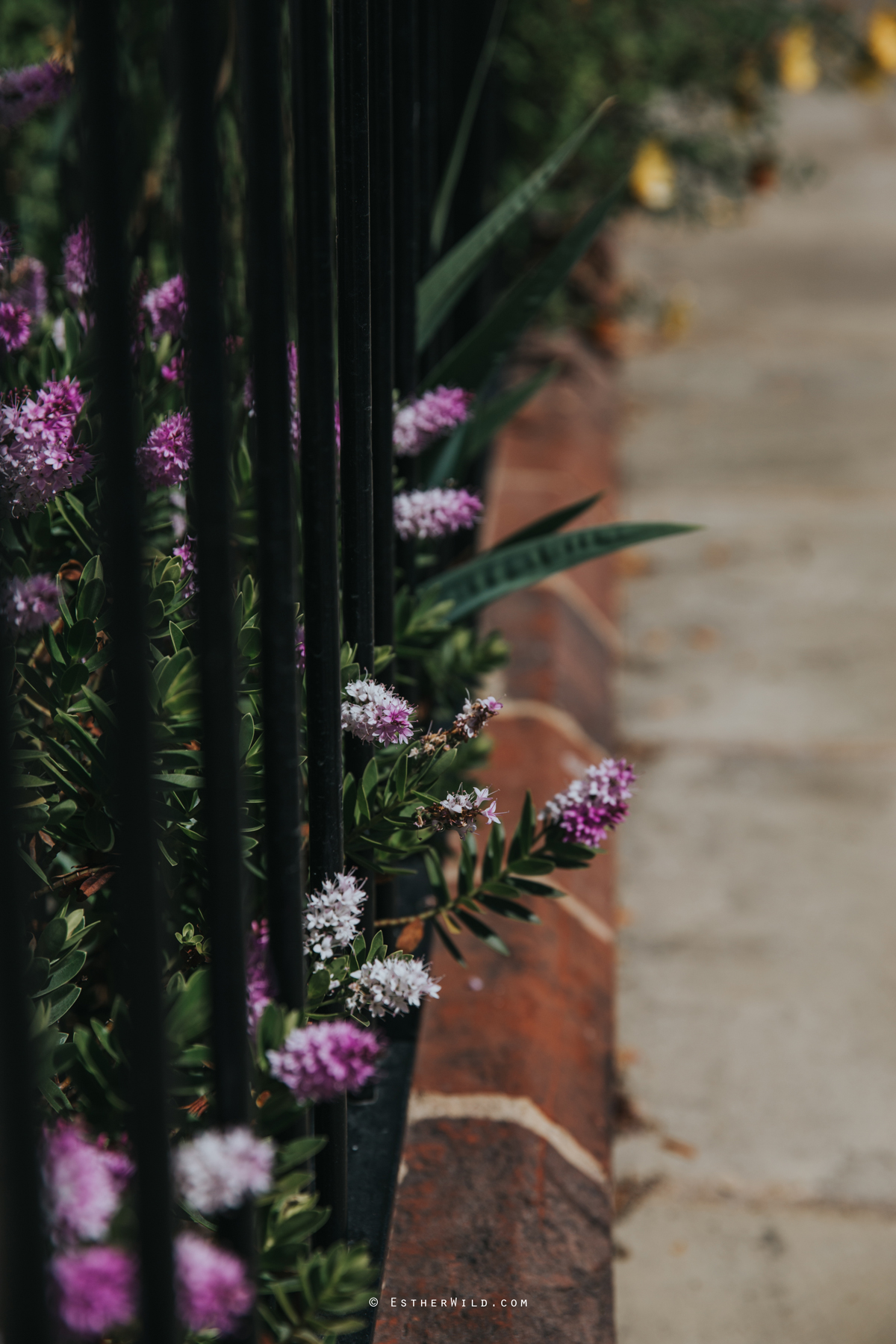 Assembly_House_Norwich_Norfolk_Esther_Wild_Photographer_IMG_0105.jpg