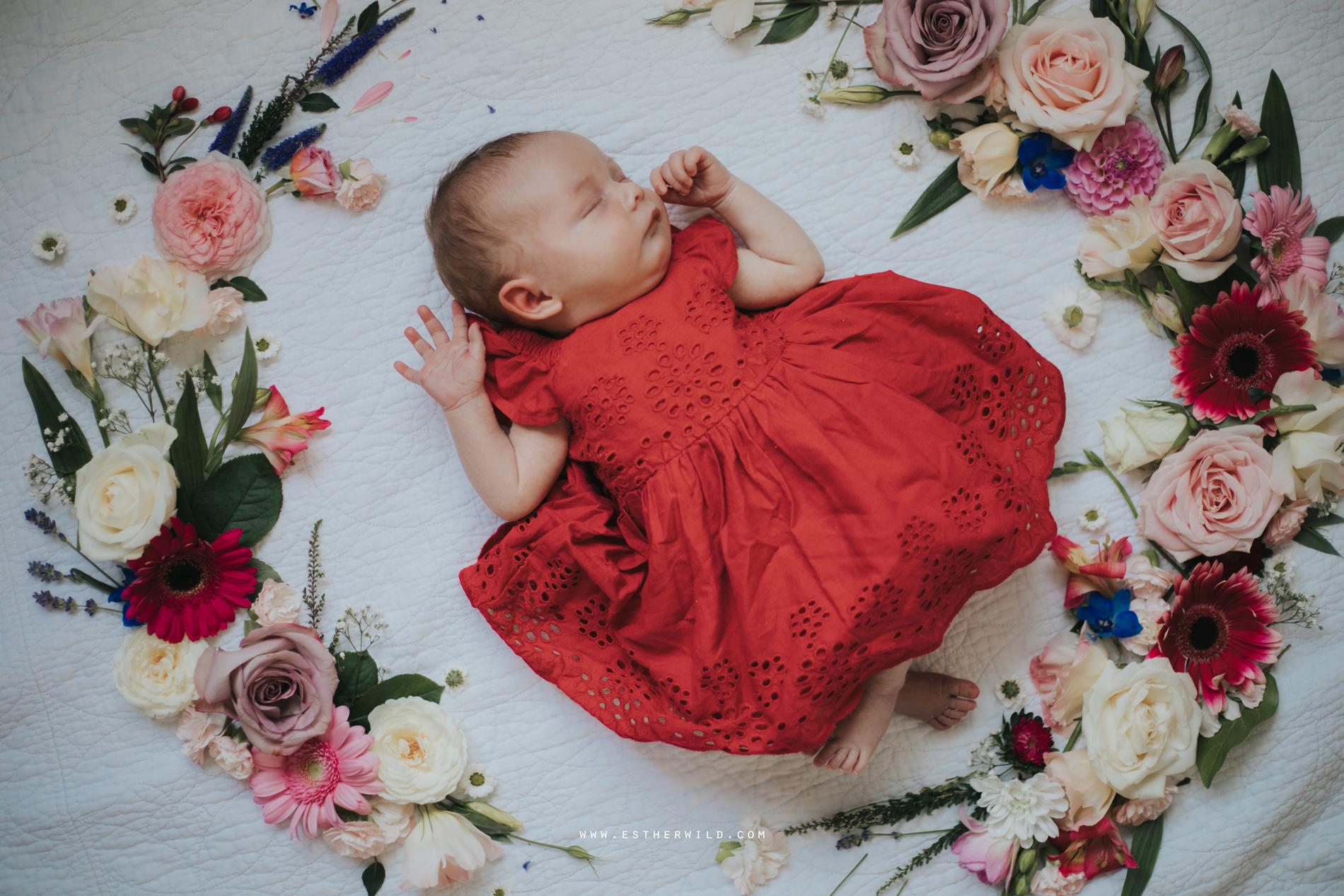 Newborn_Family_Photographer_Home_Norfolk_3R8A3842.jpg