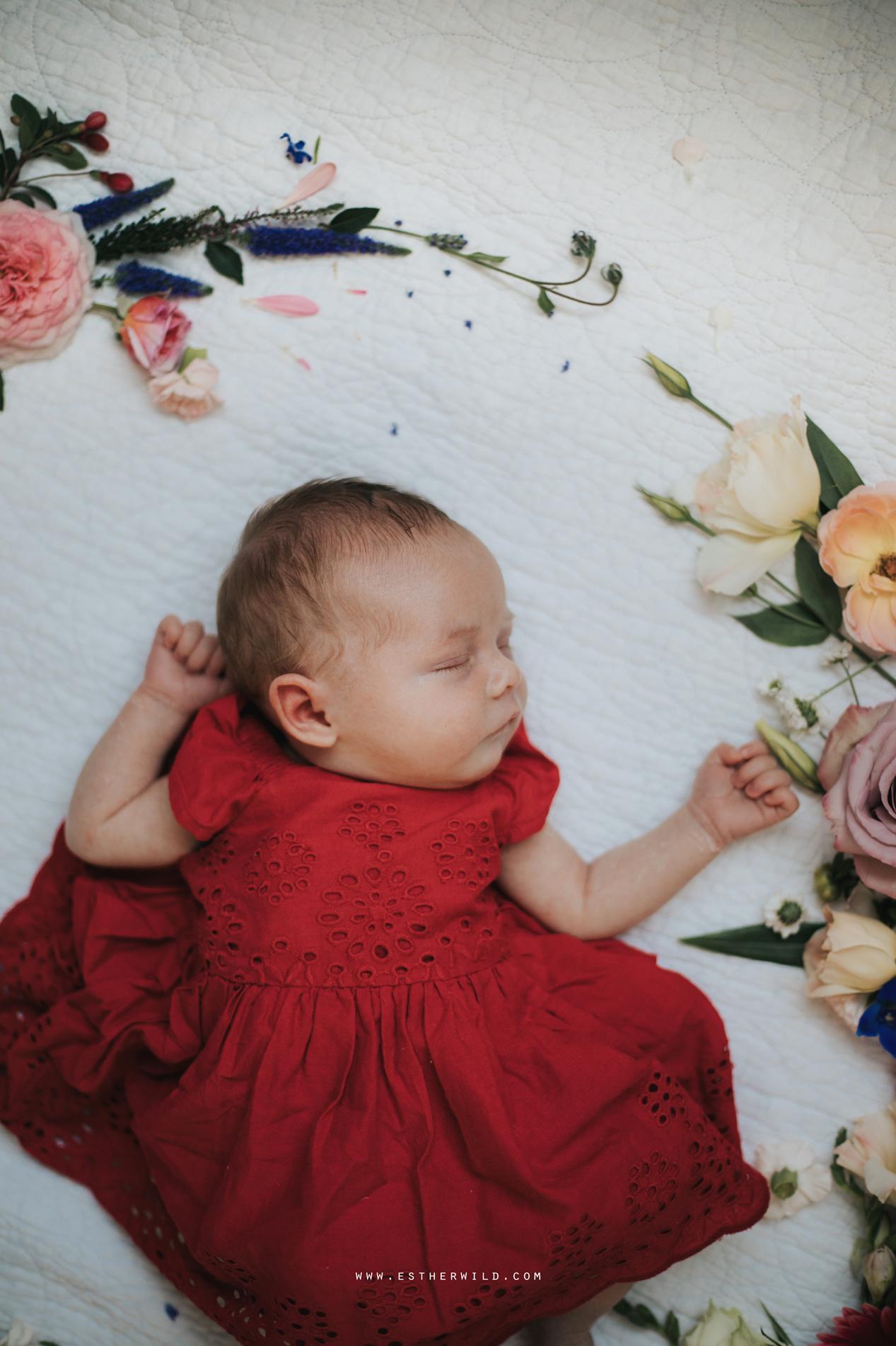 Newborn_Family_Photographer_Home_Norfolk_3R8A3846.jpg