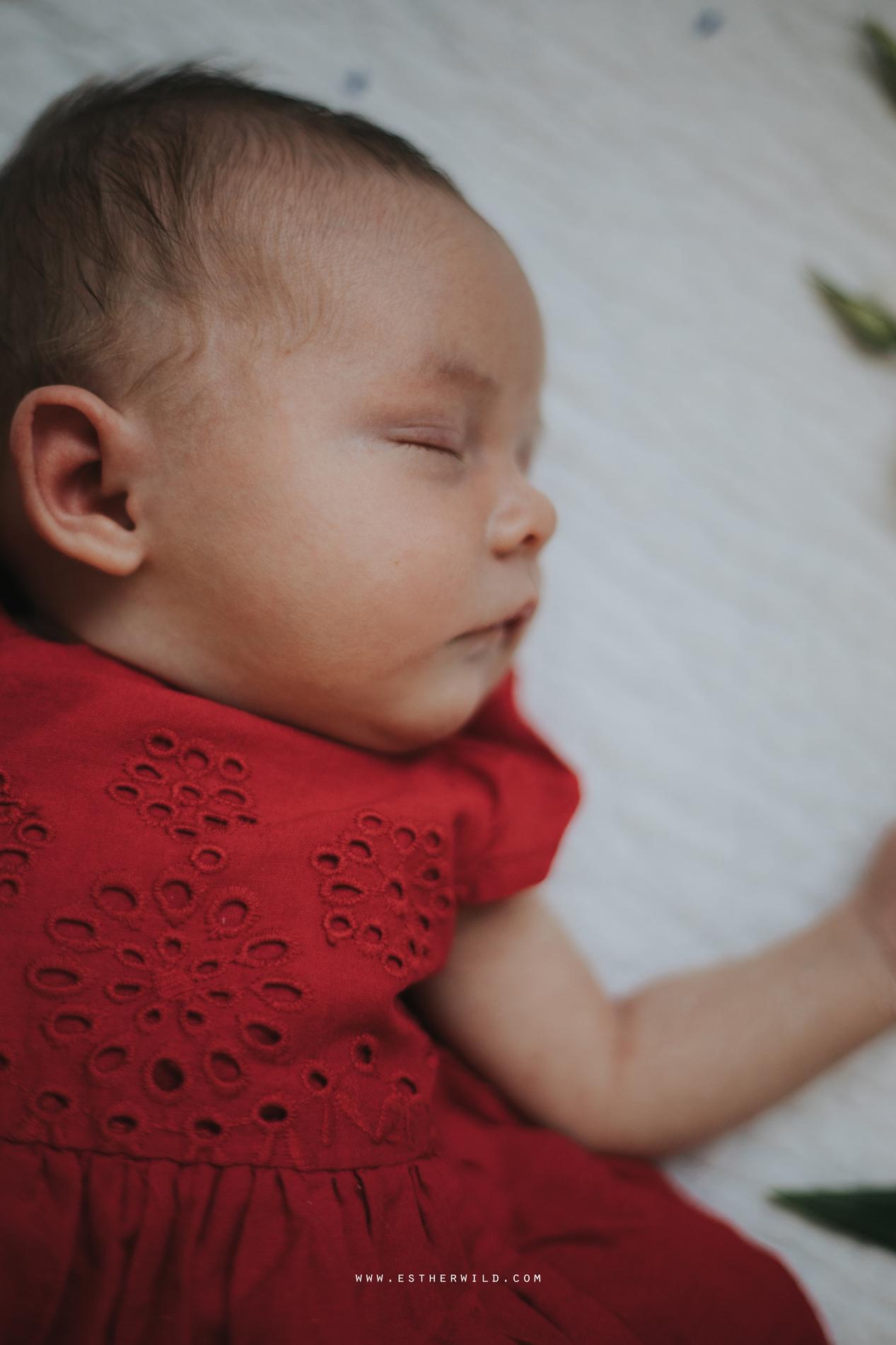 Newborn_Family_Photographer_Home_Norfolk_3R8A3850.jpg