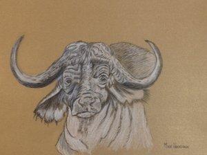 cape+buffalo+Mike.jpg