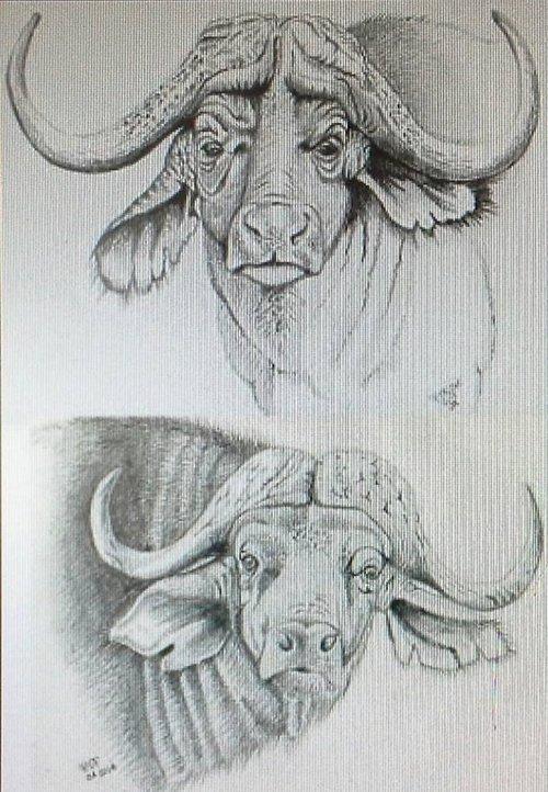 Paul+foster+cape+buffalo.jpg