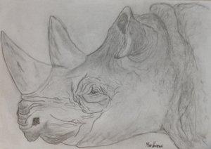 Mike+H+rhino.jpg