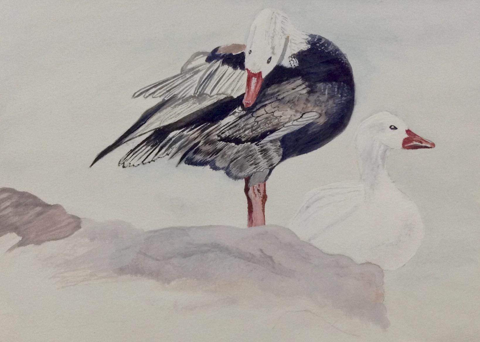Brenda's work in progress of a Sea bird.