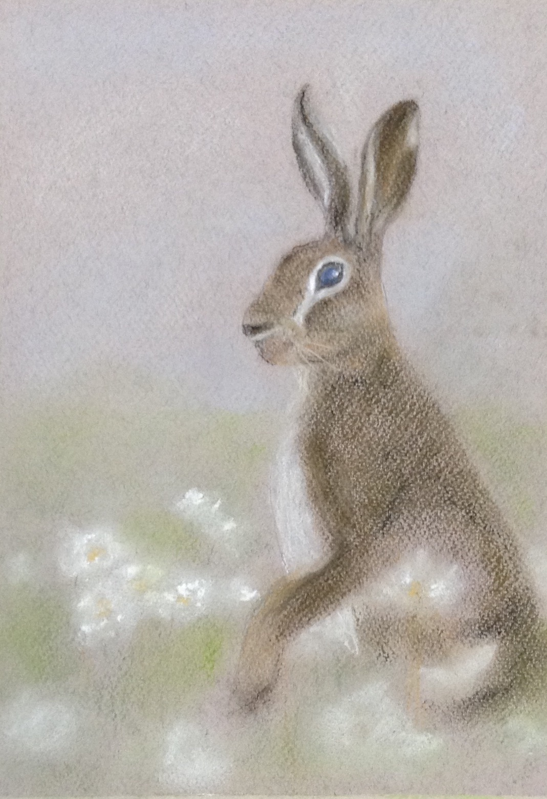 Angelas rabbit.jpg