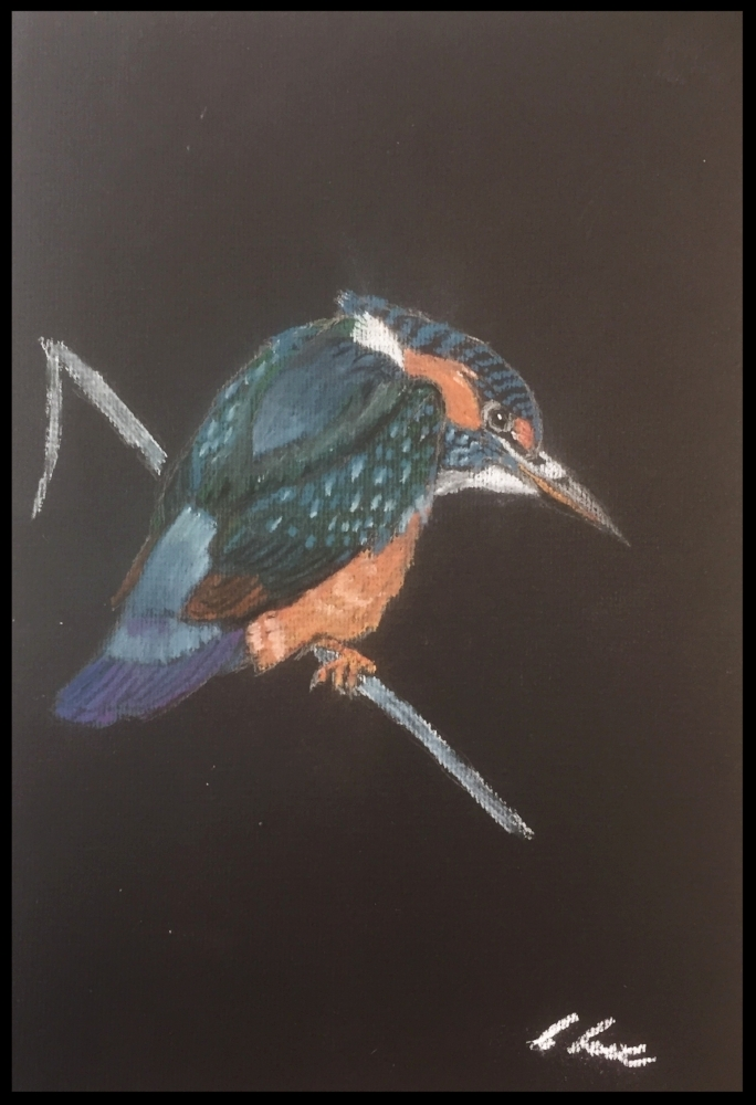 Colin's Lowe's Kingfisher in pastel.