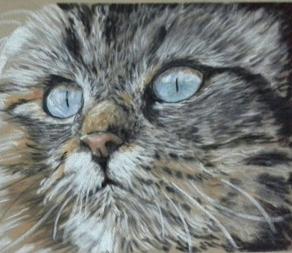 Janet Cat.jpg