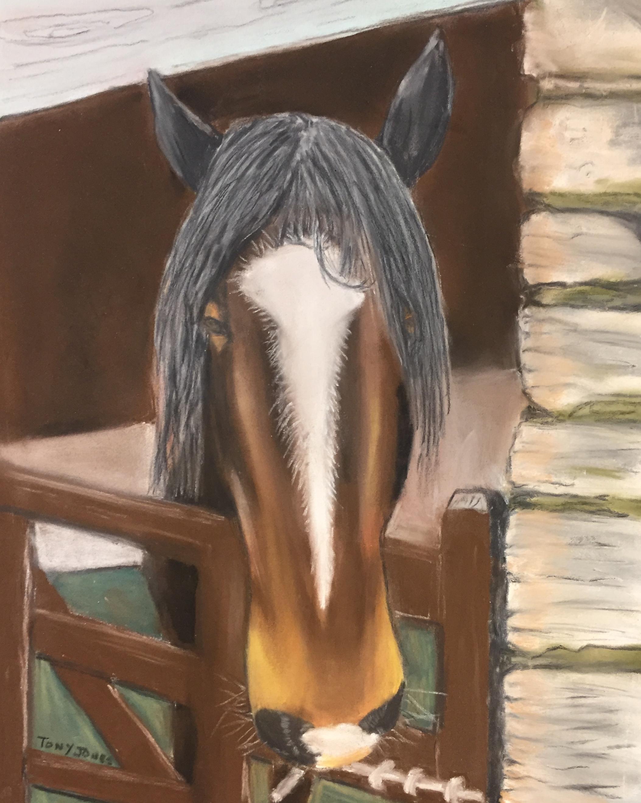 TJ horse.jpg
