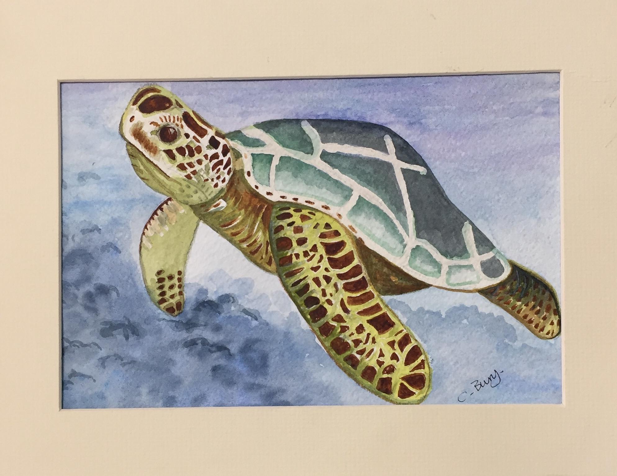 CB turtle.jpg
