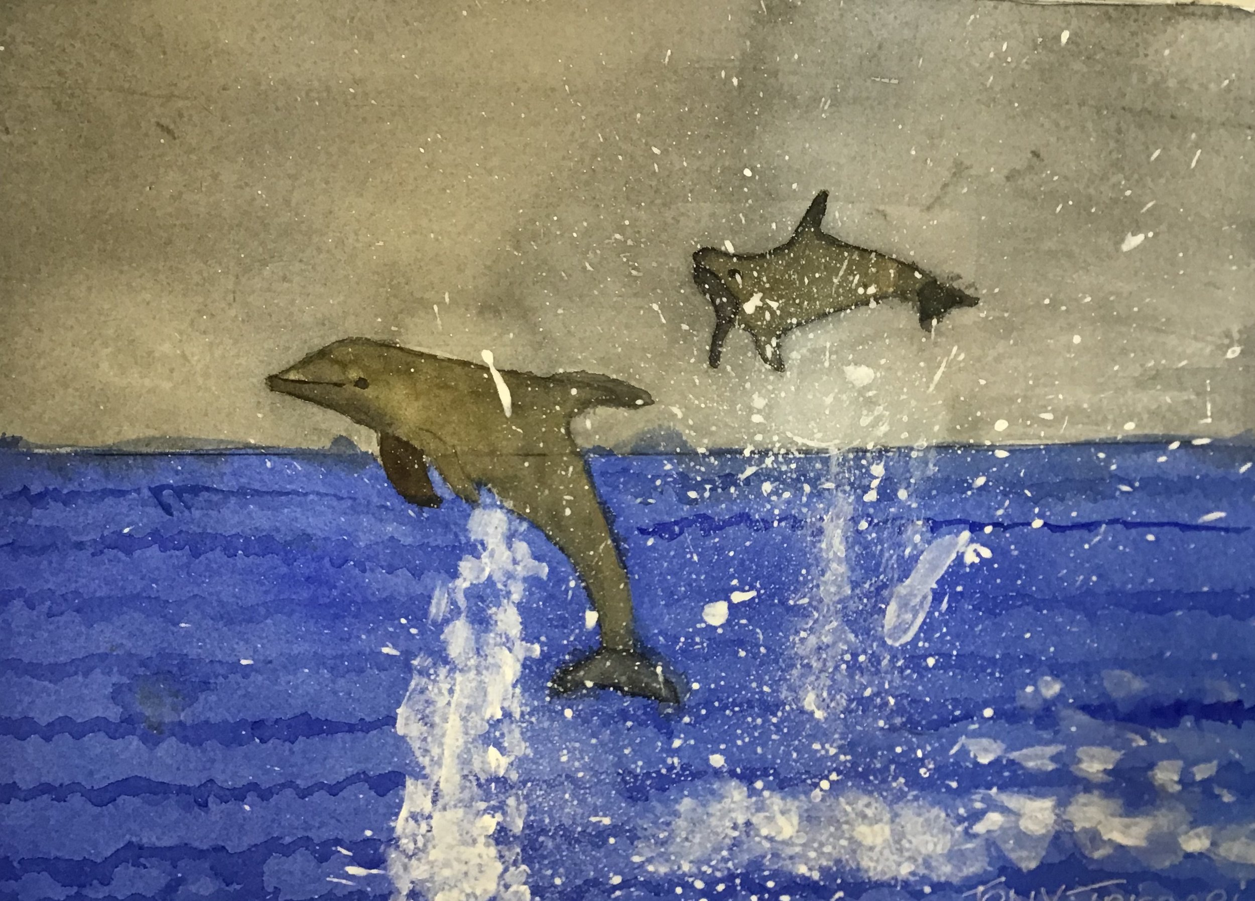 TT dolphin.JPG