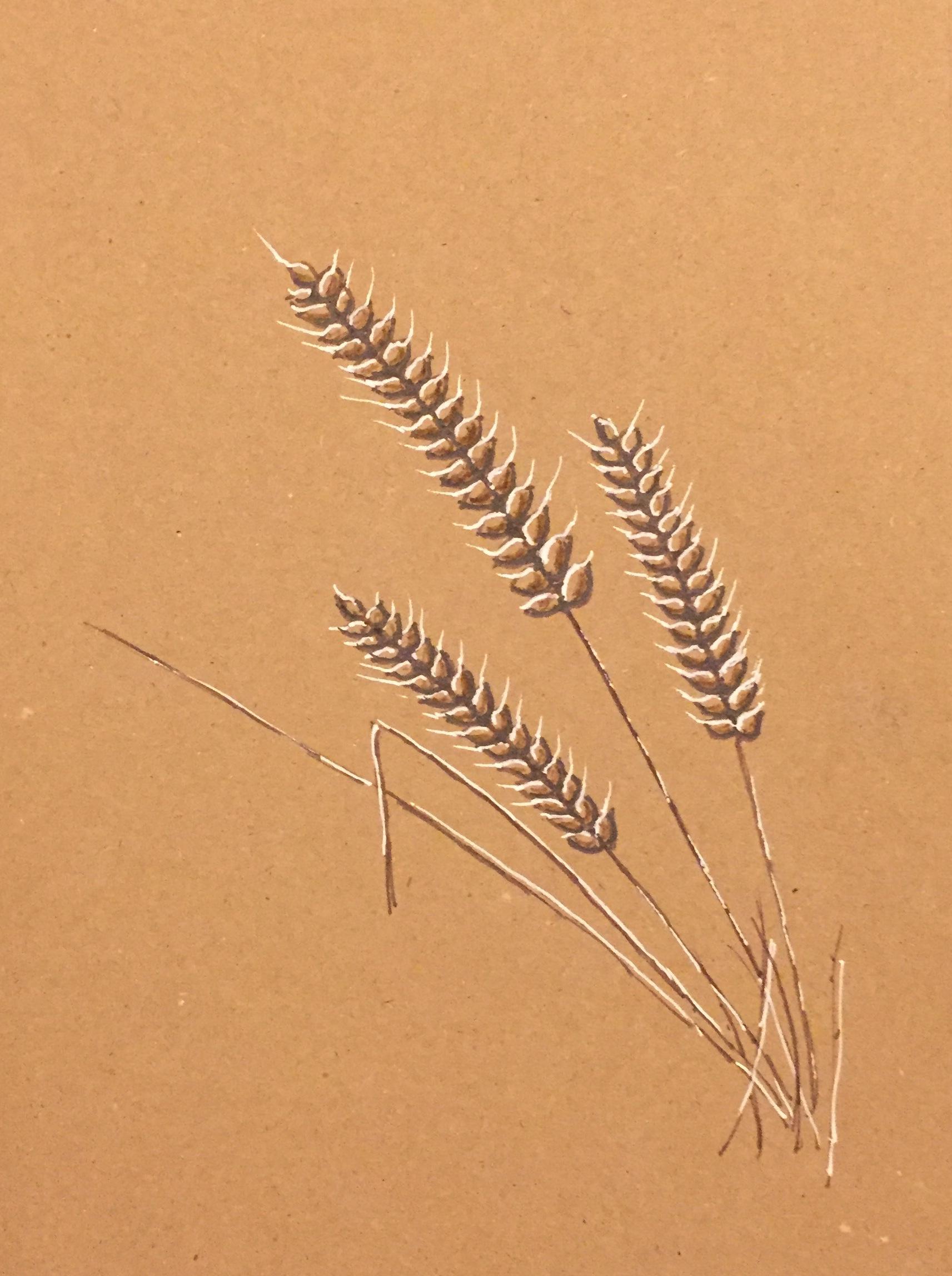 TJ grass.jpg