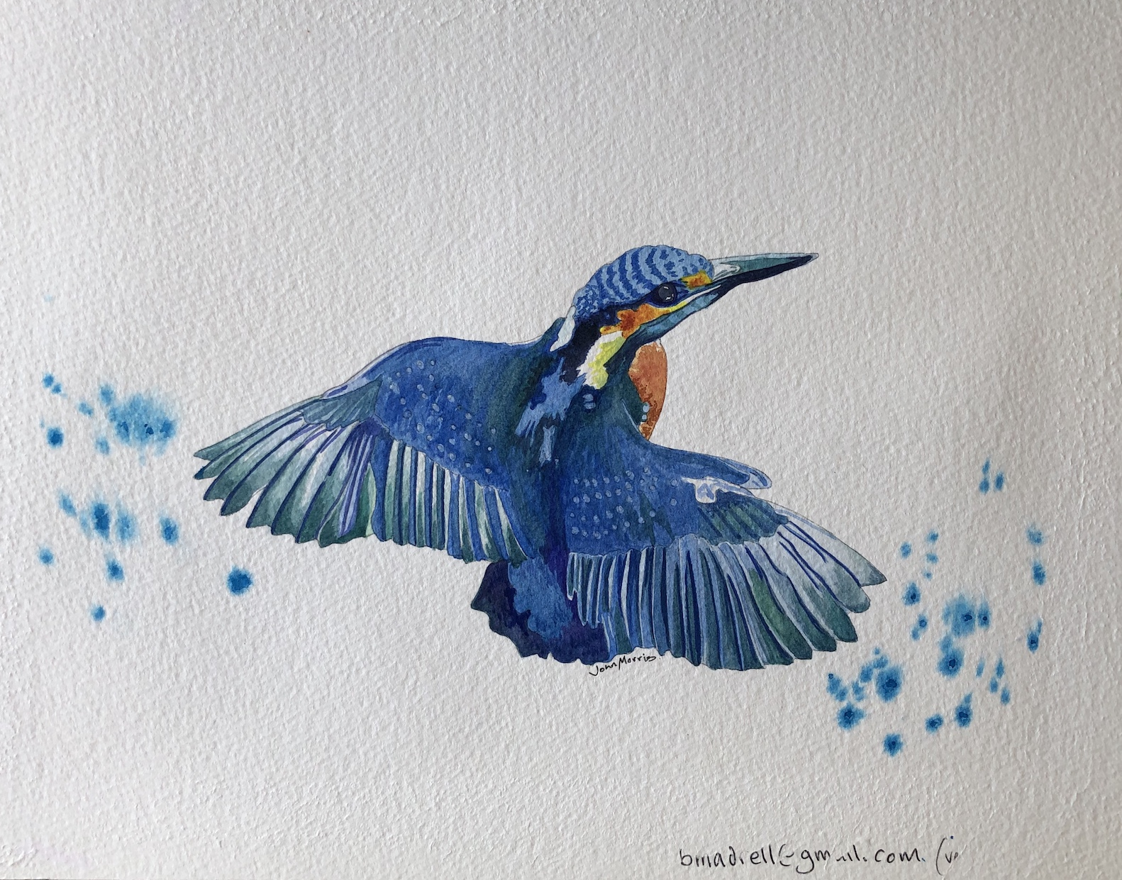 John bird.jpg