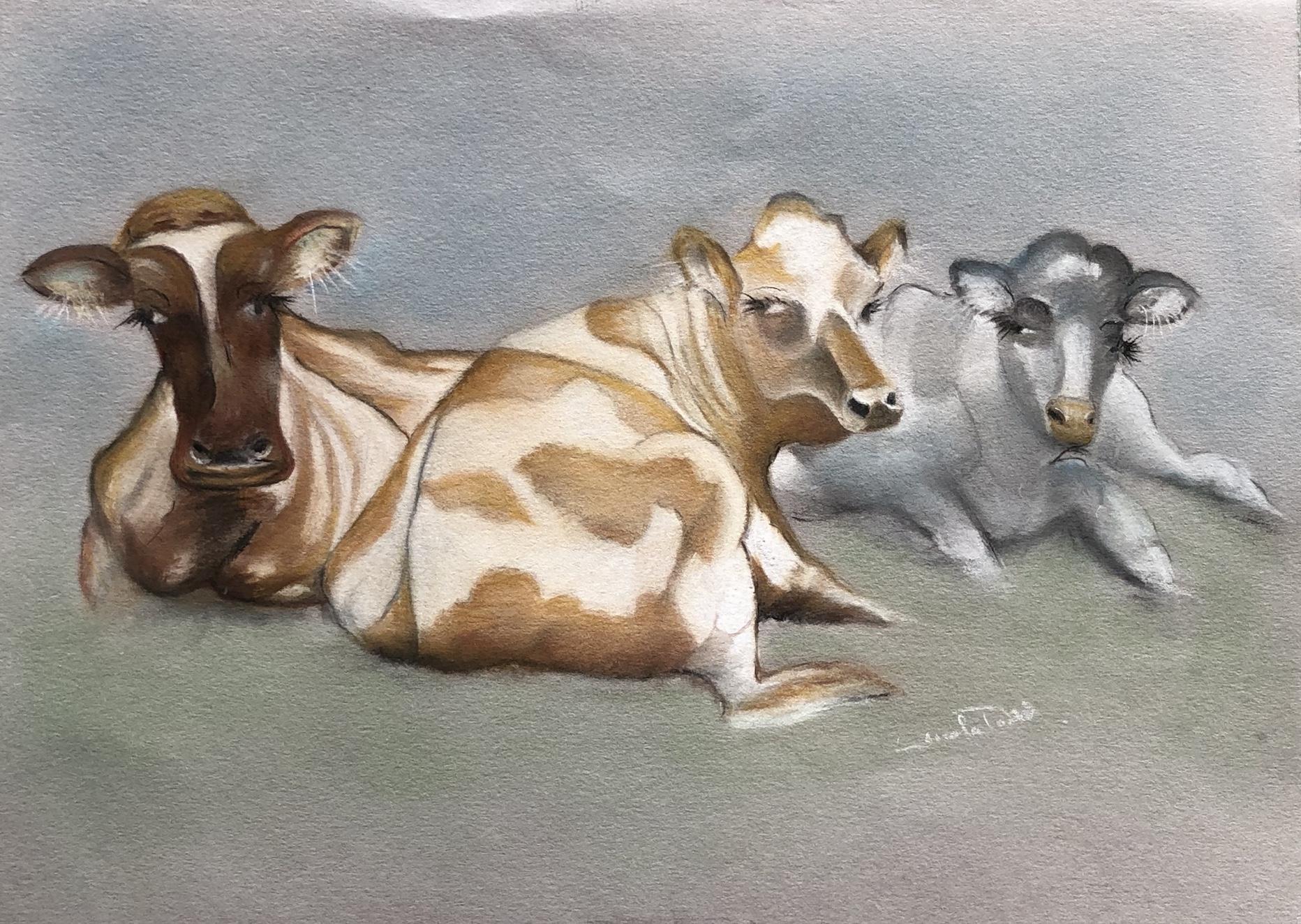 Lynda cows.jpg