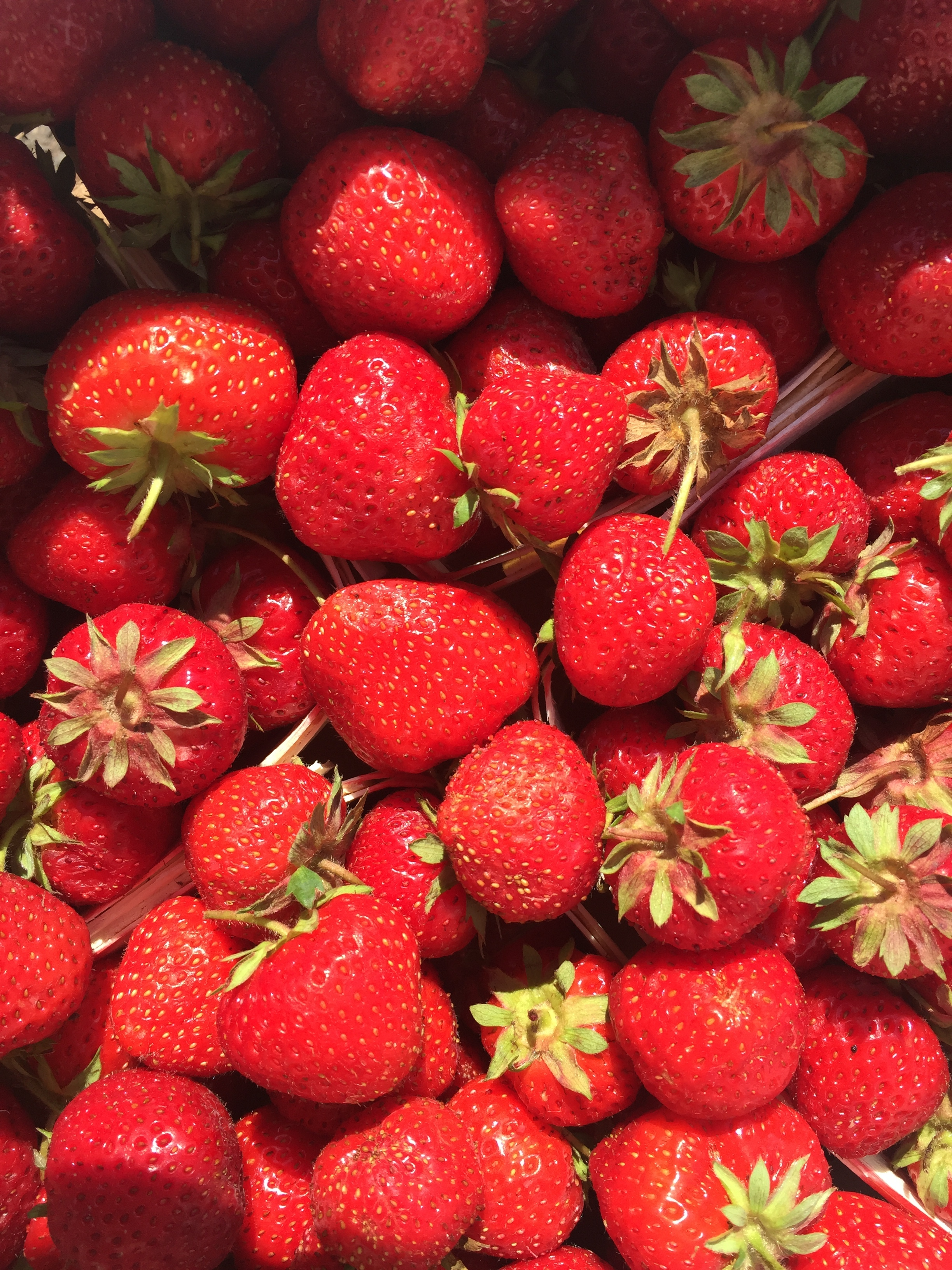 Fresh strawberries grown in Glastonbury, CT.