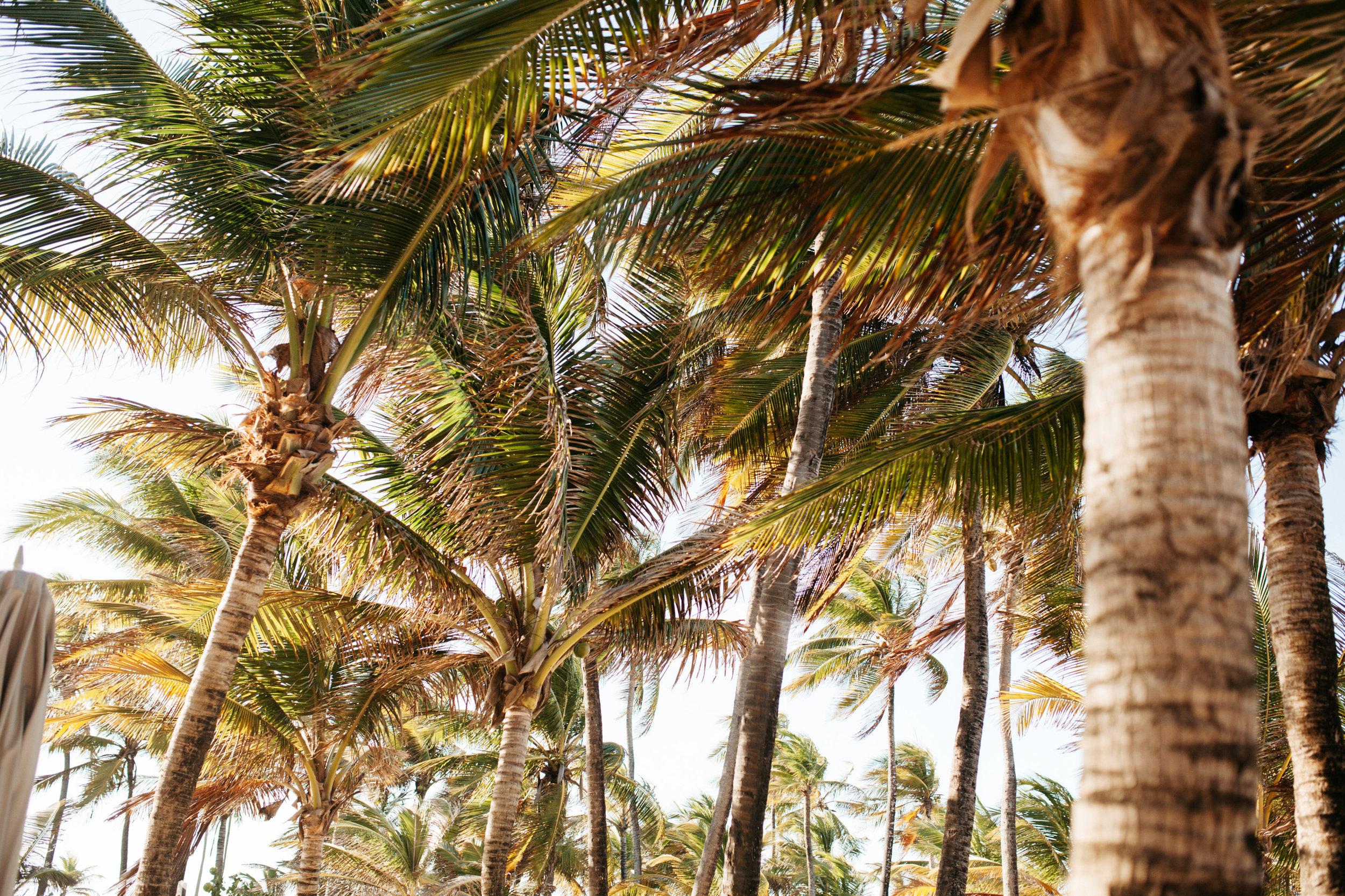 PuertoRico_ToriRayPhotography-115.jpg