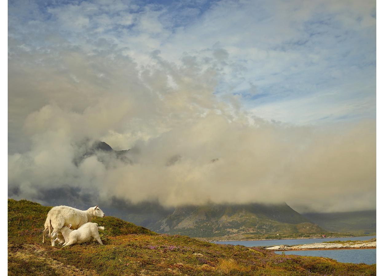 Lofoten Snacktime, Lofoten Islands, Norway