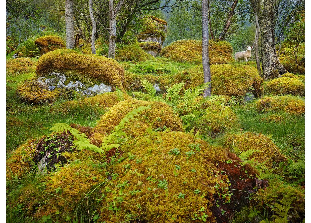 Olaf, Lofoten Islands, Norway