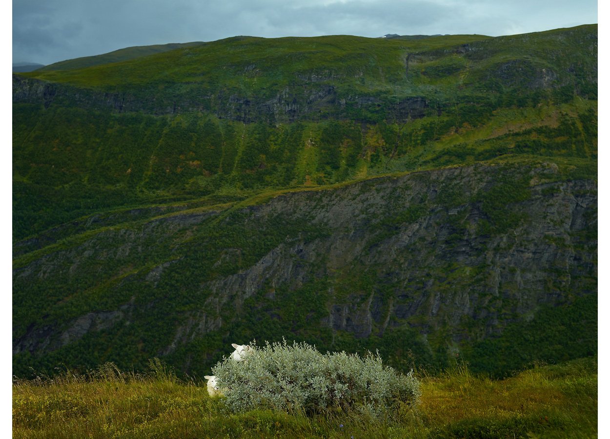 Bashful, Norway