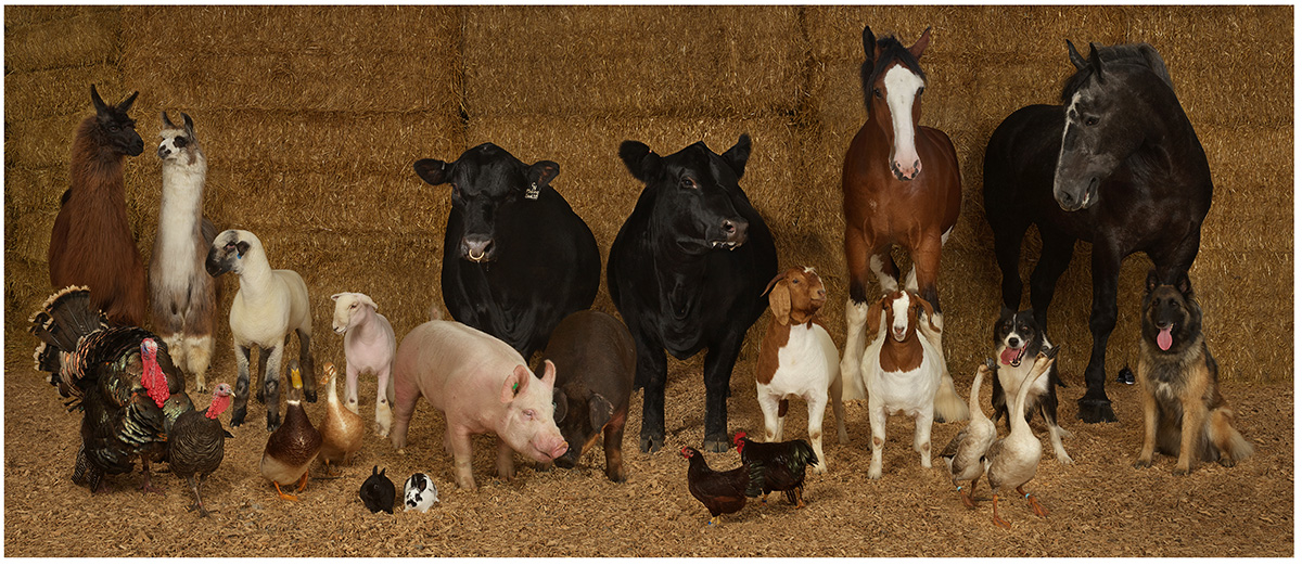 Minnesota State Fair Supreme Champion Pairings from 2018 by R. J. Kern, archival pigment print, 2019
