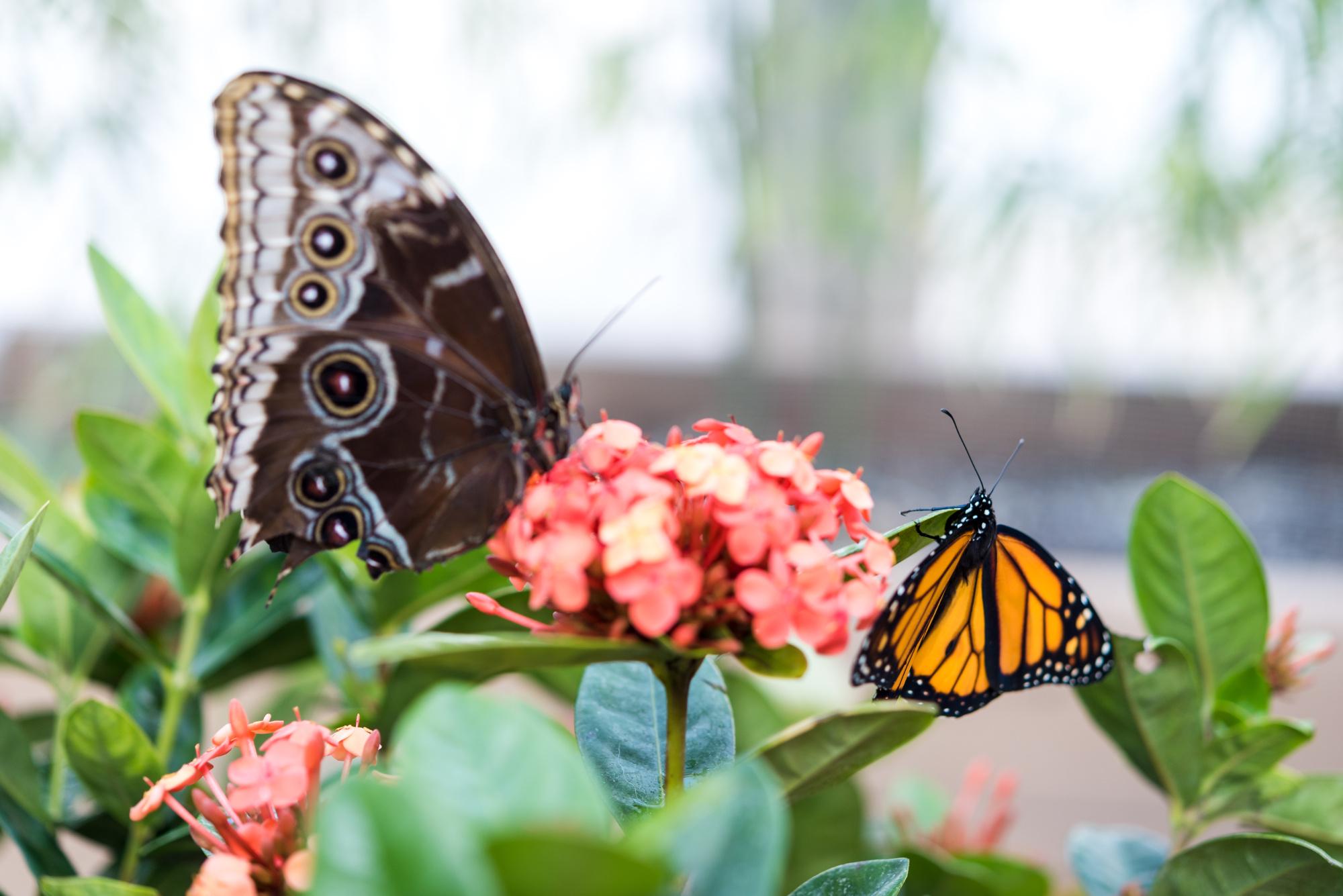 NCG_Butterflies_Orchids_2018 (34 of 98).jpg