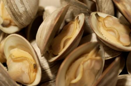 Steamed clams open.JPG
