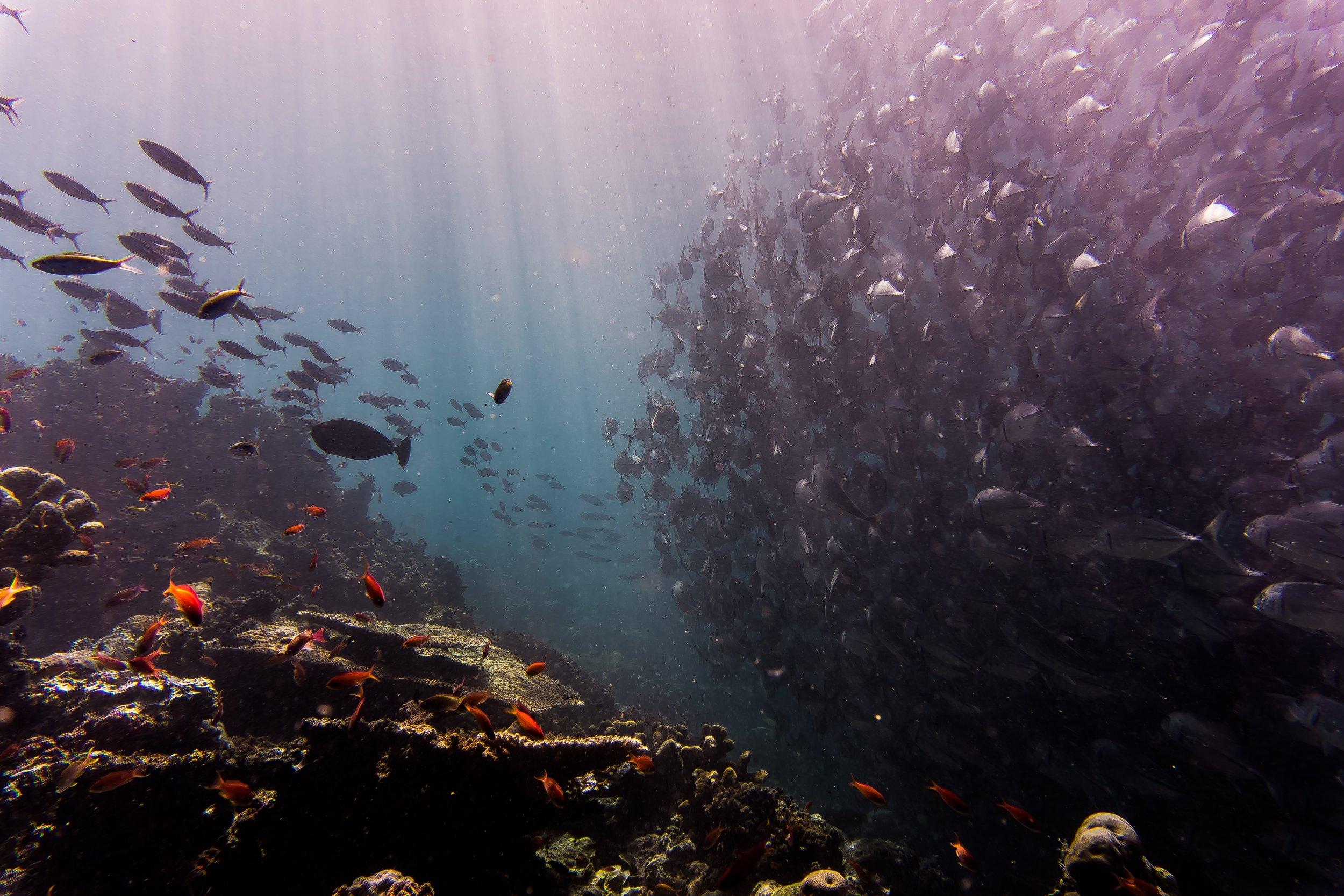Locanda La Gelsomina loves diving
