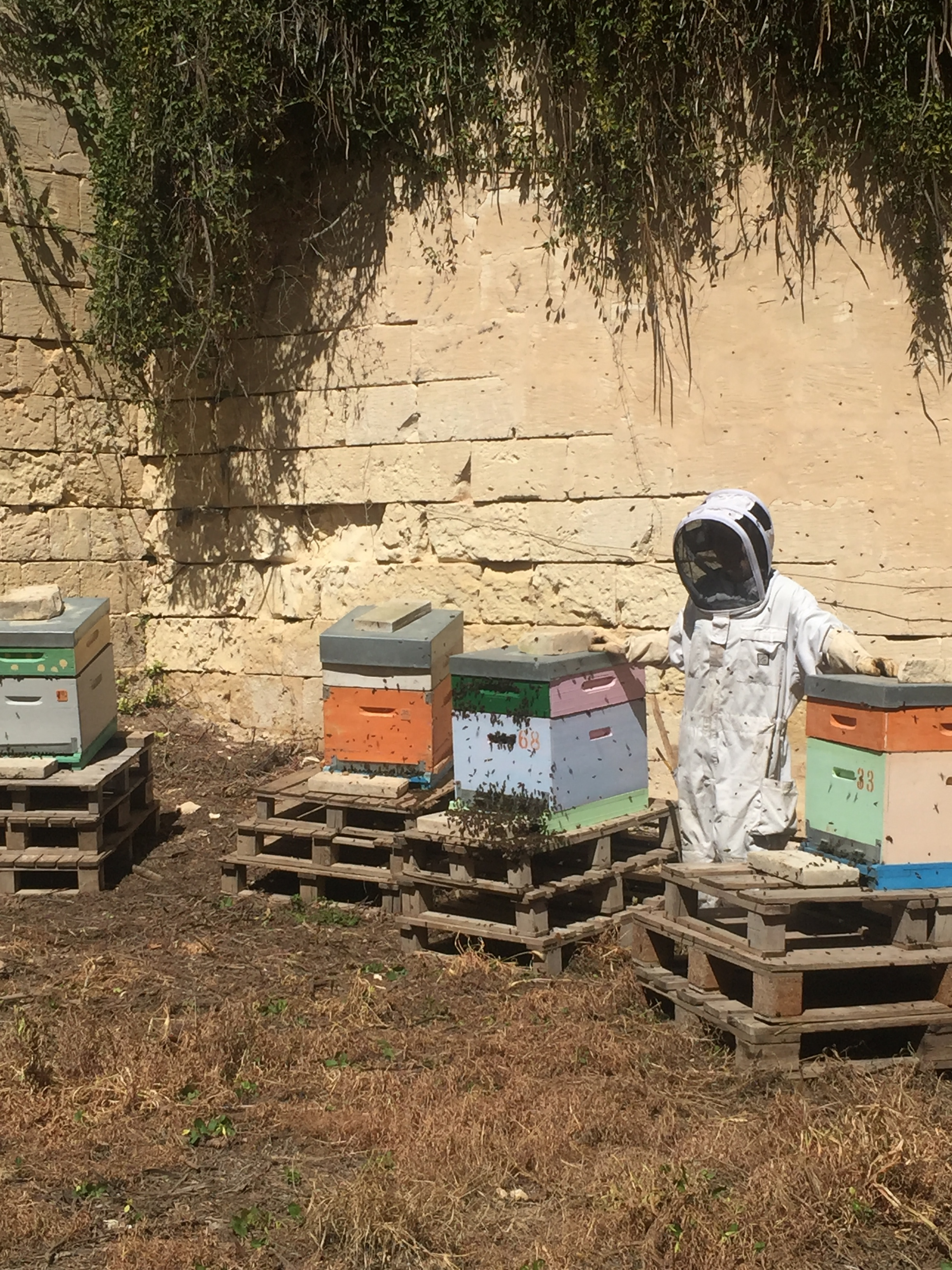 Beekeeping in Malta