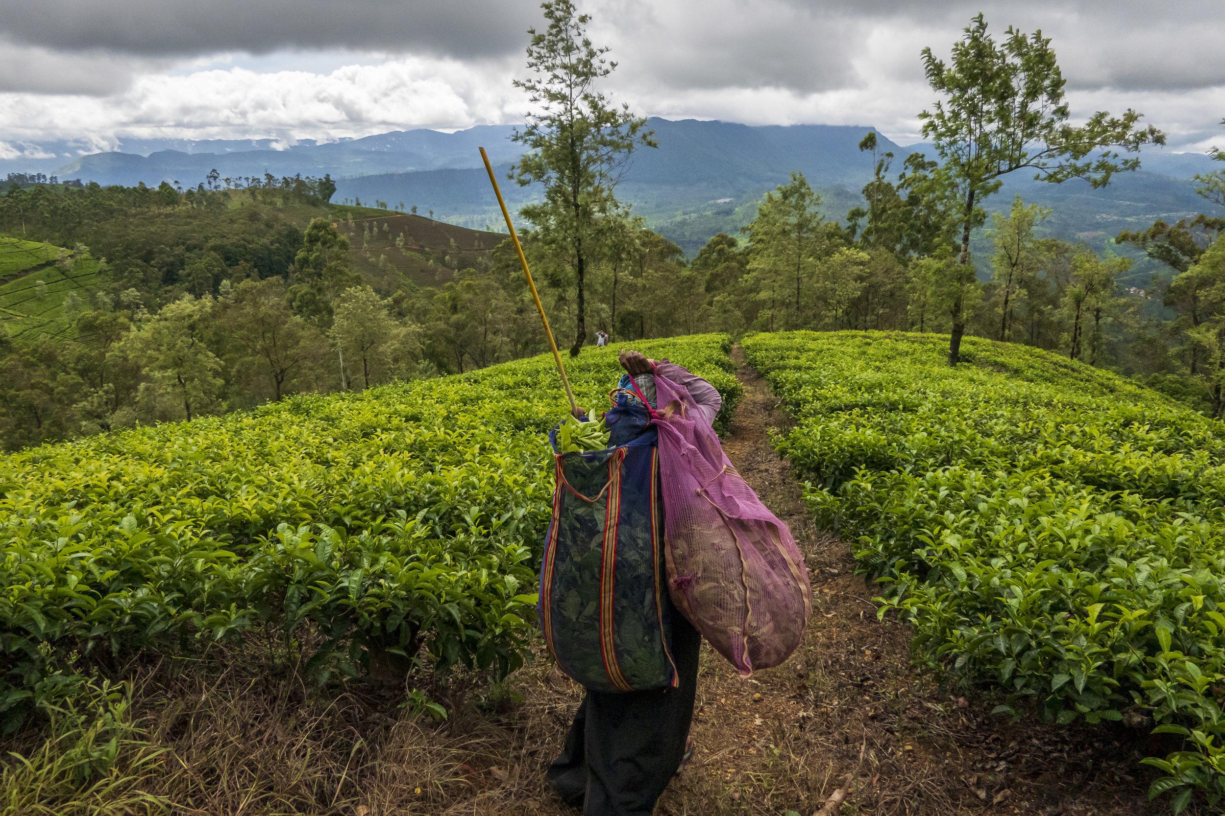 Sri Lanka und der Klimawandel --13.jpg