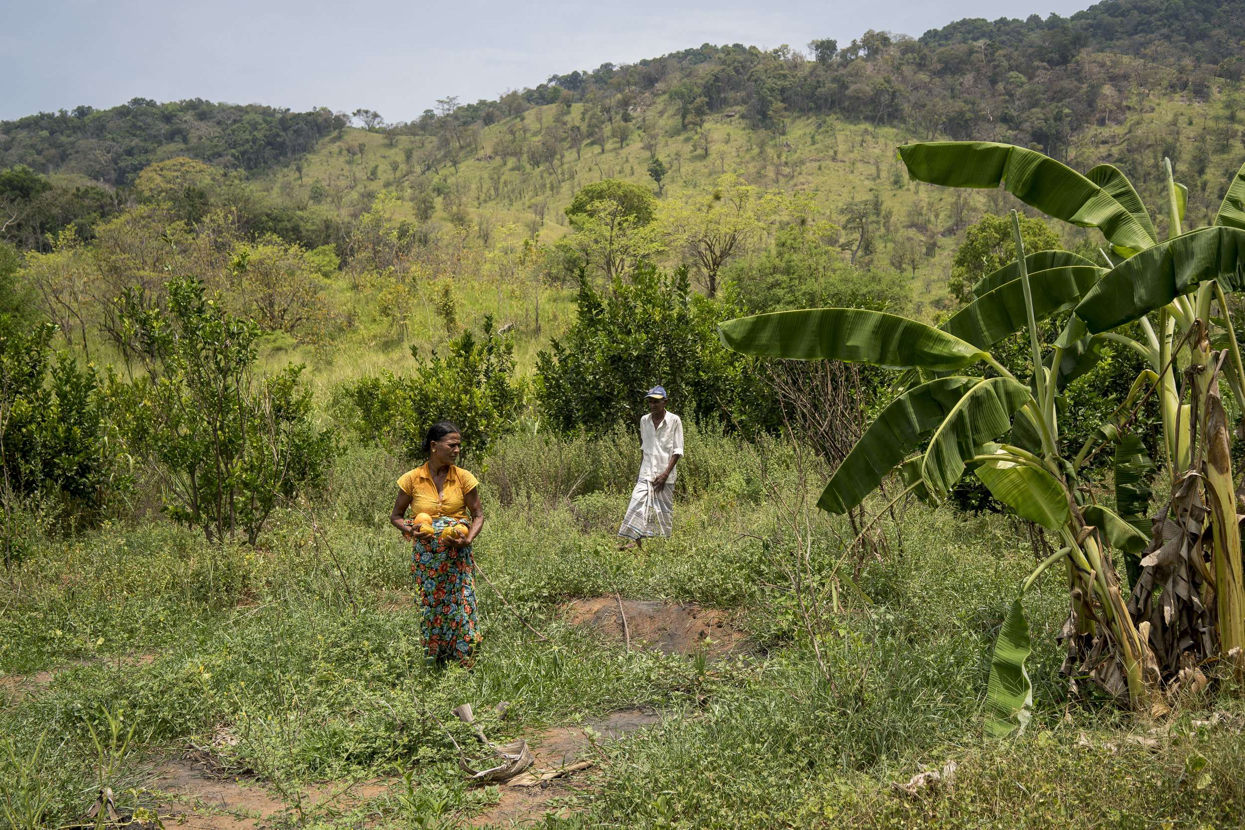 Sri Lanka und der Klimawandel --3.jpg