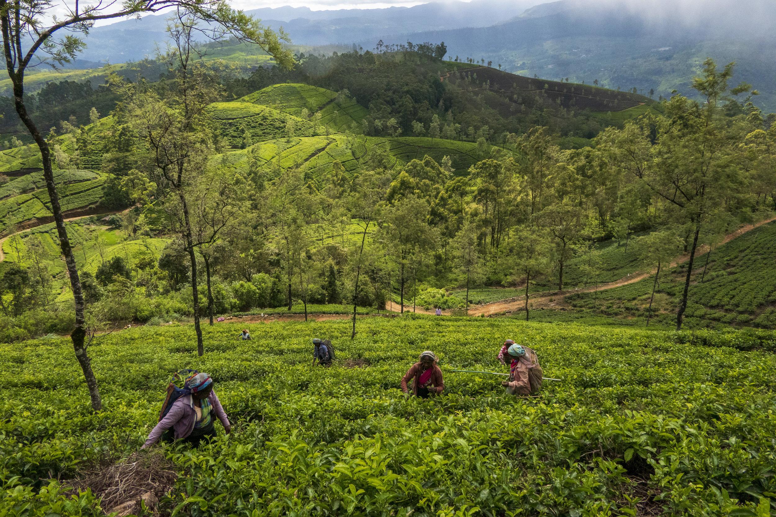 Sri Lanka und der Klimawandel --6.jpg