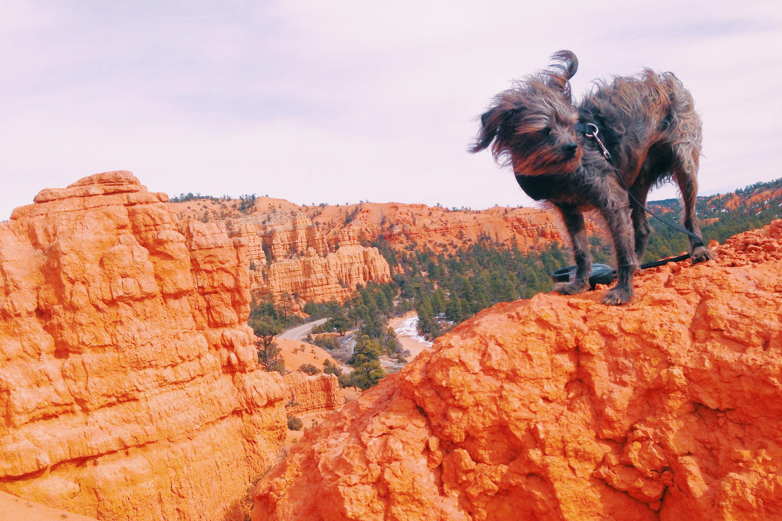 Max near Bryce Canyon
