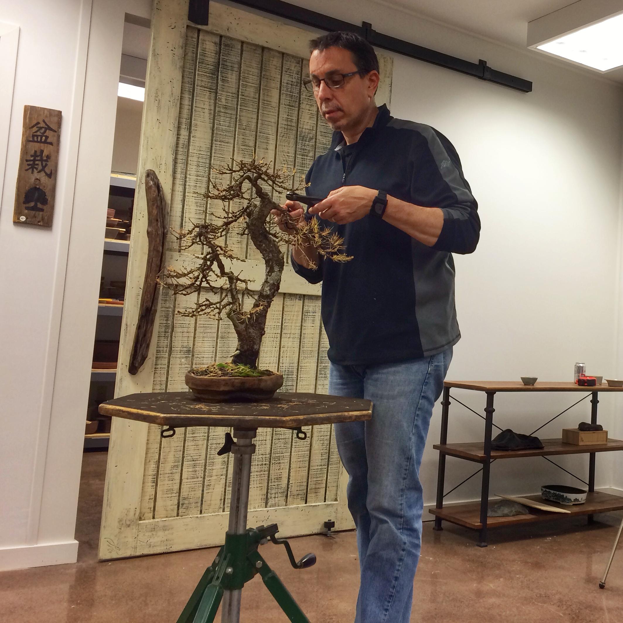 Patron Of American Bonsai Michael Pollock Of Bonsai Shinsei Ny The Artisans Cup
