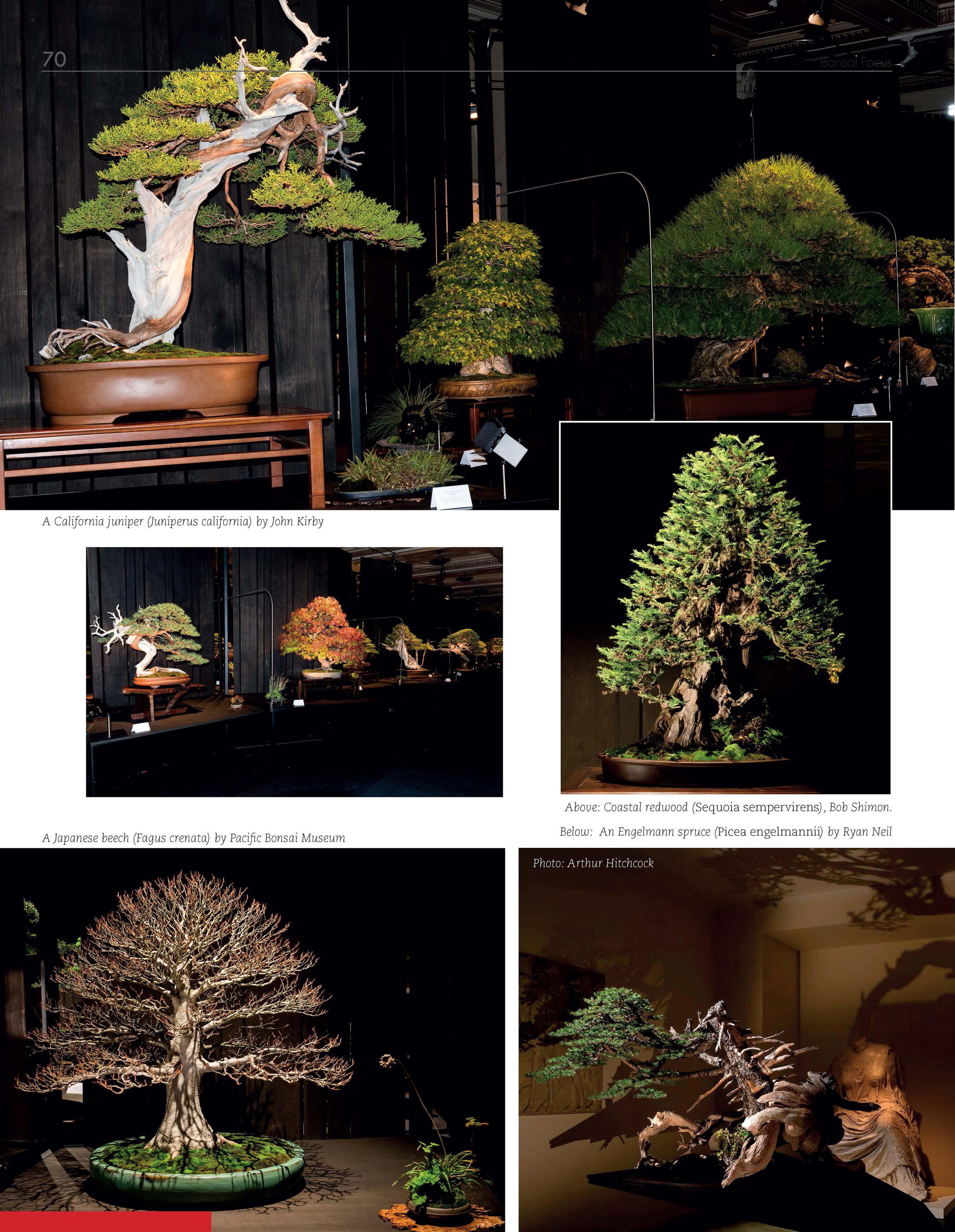Bonsai_Focus_Page_3.jpg