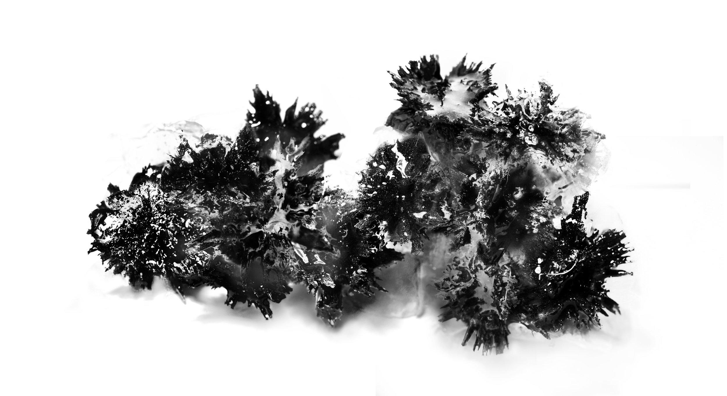 swarm7.jpg