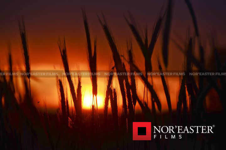 Field grass sunset in Easton, New York.