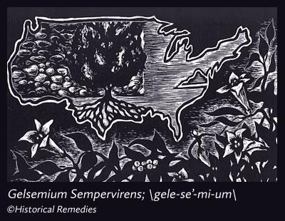 gelsenium.jpg