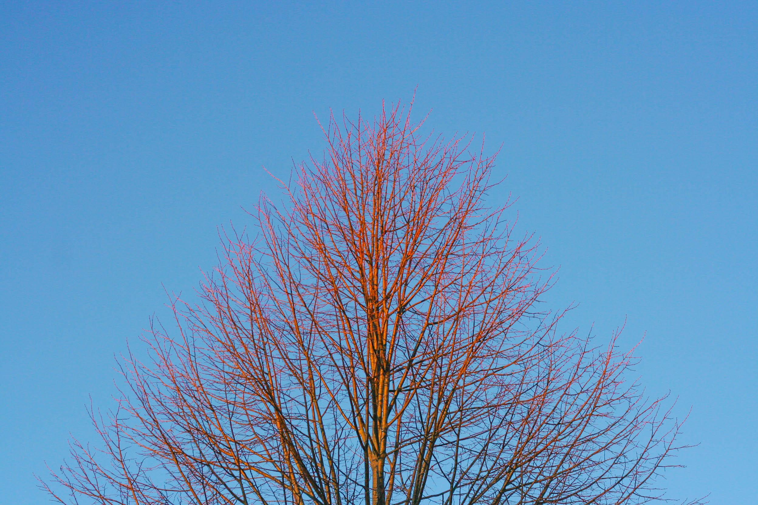 eveningtree.jpg