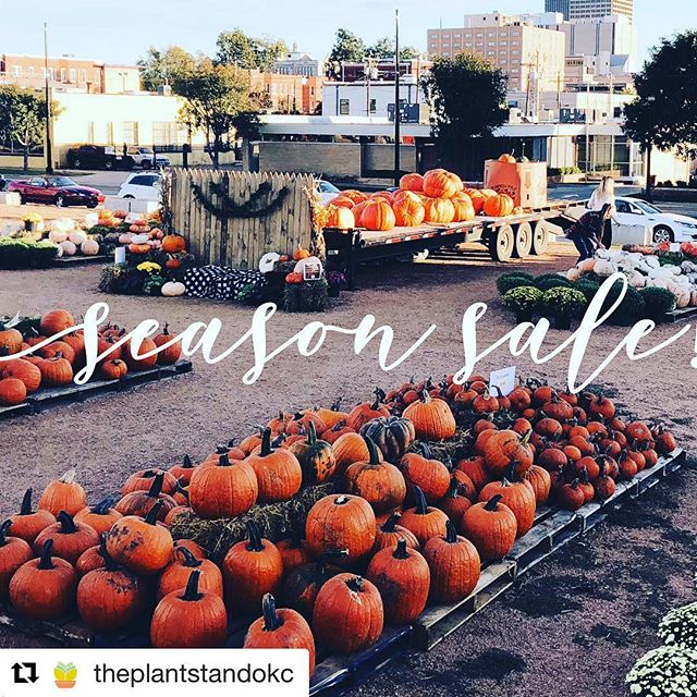 Season Sale at @theplantstandokc! #Repost @theplantstandokc ・・・ We're kicking off our season sale! 50% off specialty pumpkins and 10% off jacks! Grab yours today! 🎃🎃🎃