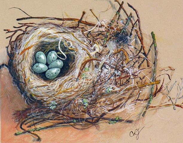 birds nest cropped.jpeg