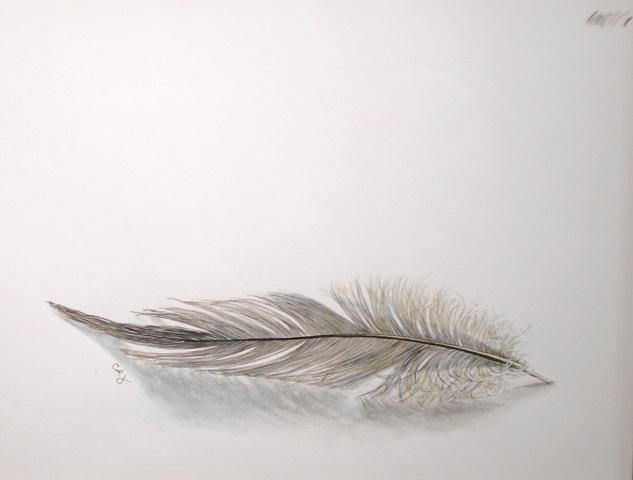 Heron Feather.jpeg