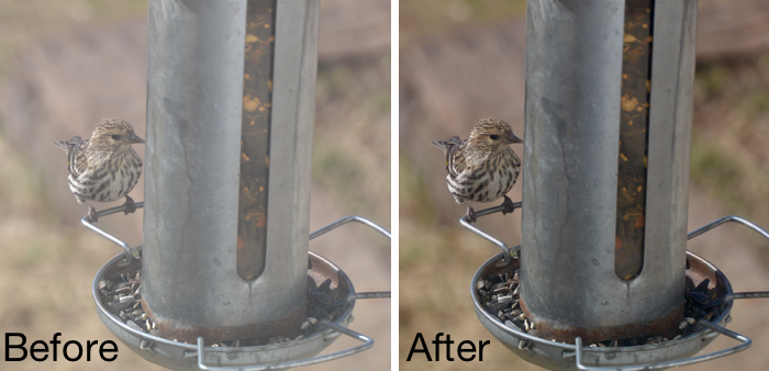 photos-fix-birds.png