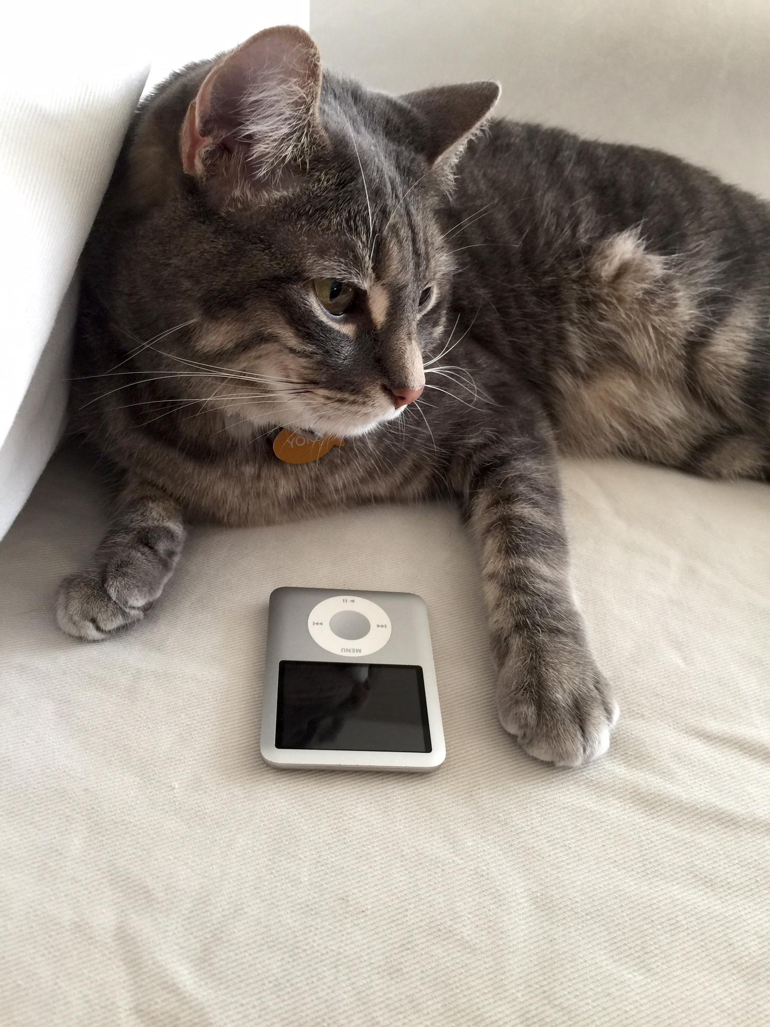 Yoko and her classic iPod.jpeg
