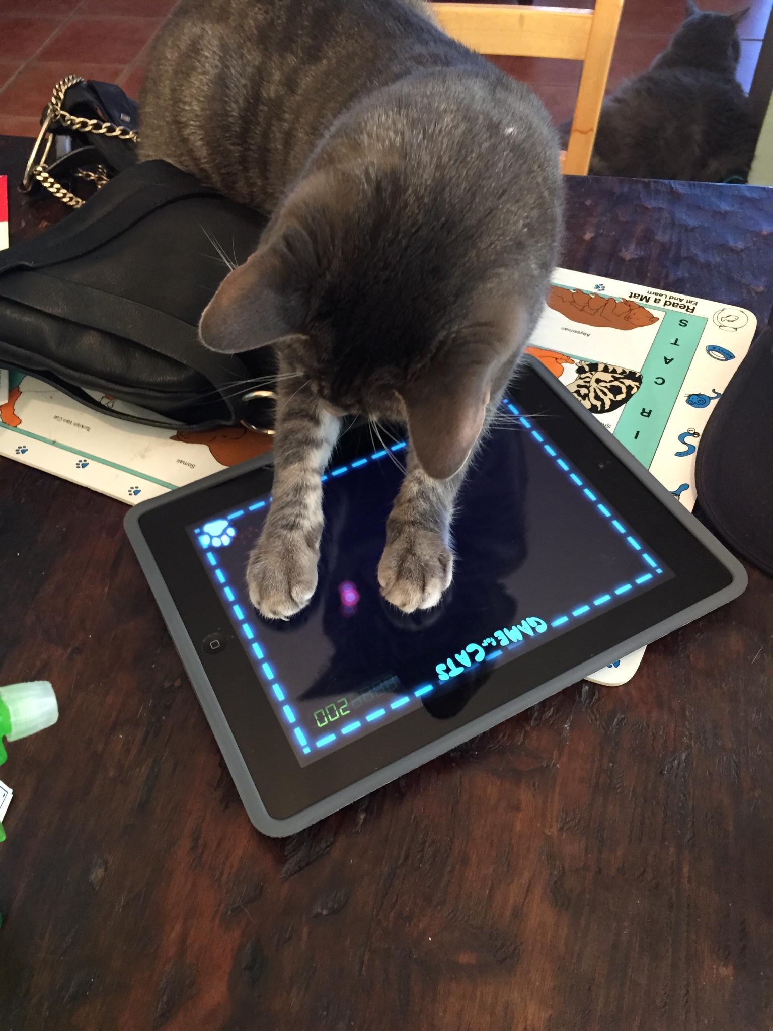 Yoko playing games on her iPad 2.jpeg
