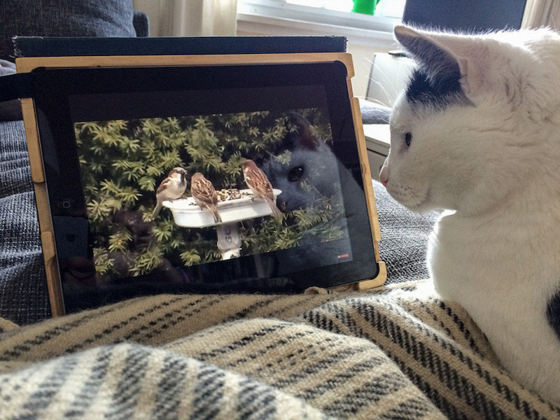 Gijs watching bird videos on YouTube. Photo via Flickr user  FotoRolf  (Rolf Rosing), All Rights Reserved