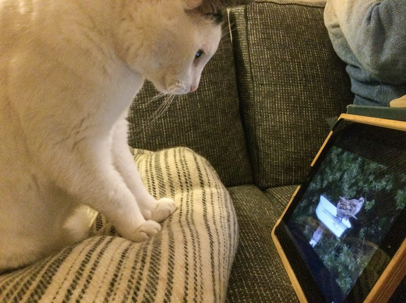 Gij  s watching bird videos on YouTube. Photo via Flickr user  FotoRolf  (Rolf Rosing), All Rights Reserved