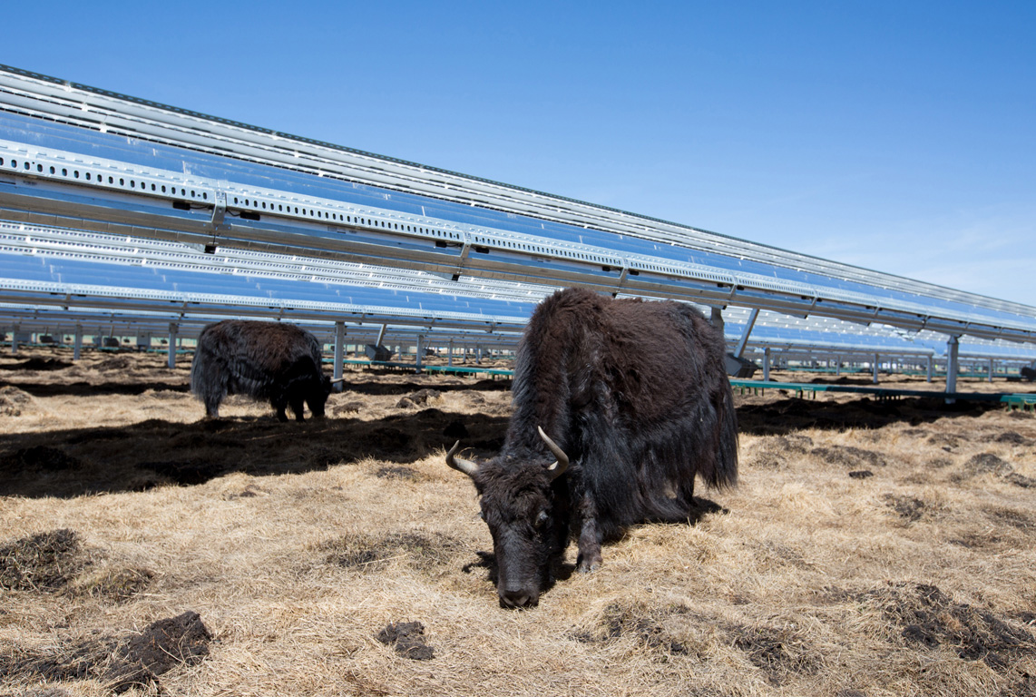 This solar panel installation in China is mounted high so yaks can graze beneath it. Image via Apple