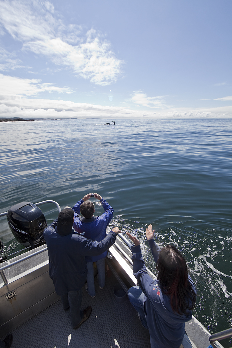 Whale Watching, Tofino, Bear Watching, Hot Springs Cove, Tours, Adventure, Gray Whales, Humpback Whales, Killer Whales, Orca Whales, Whales, Ocean, Nature, Covered Boat, Nature