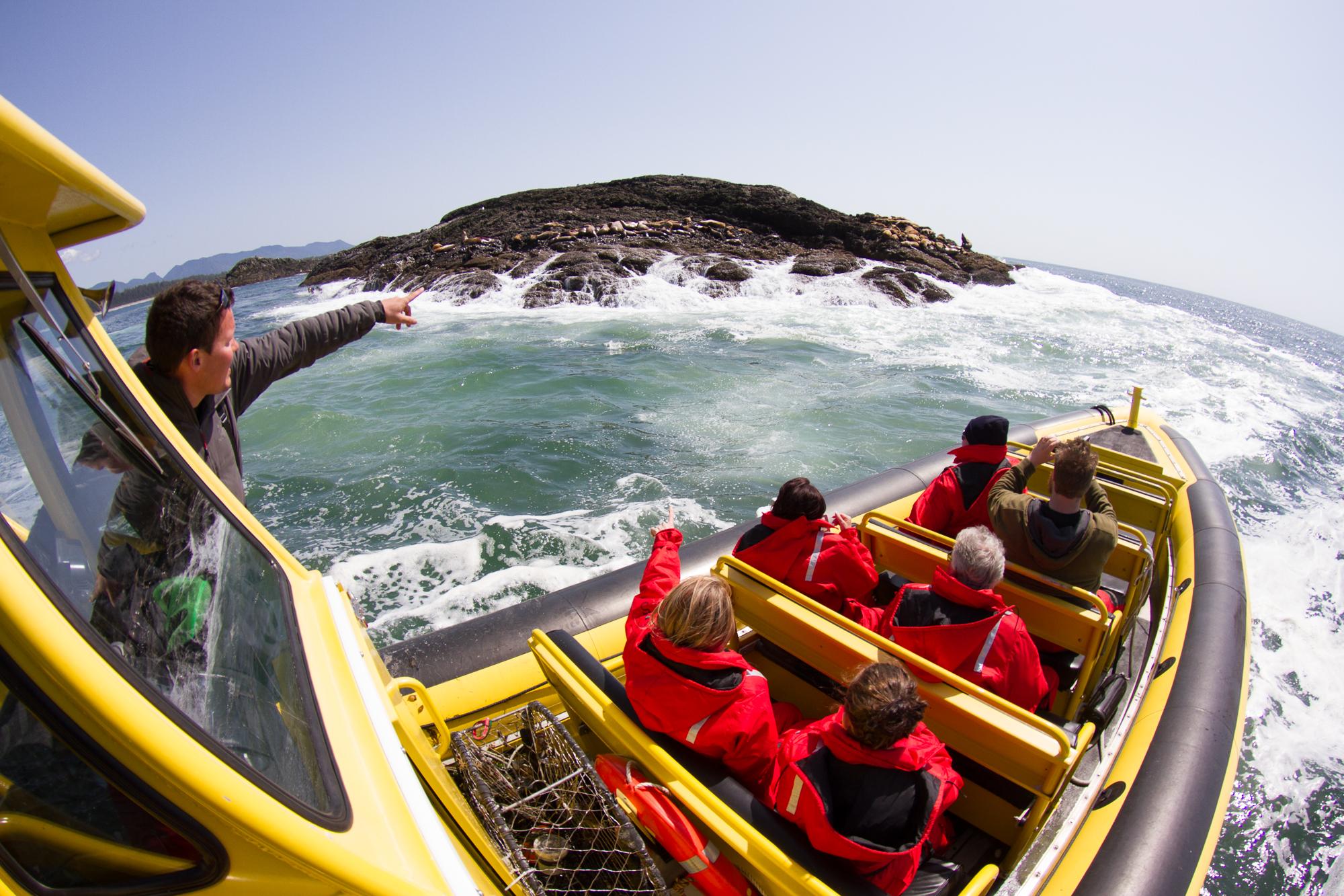 Whale Watching, Tofino, Bear Watching, Zodiac, Tours, Adventure, Wildside