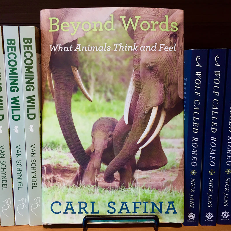 Beyond Words - What Animals Think and Feel. By Carl Safina